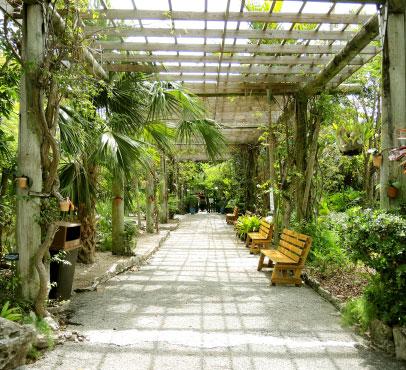 Garden of the Groves on Grand Bahama Island